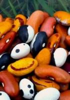 bean & nothingness