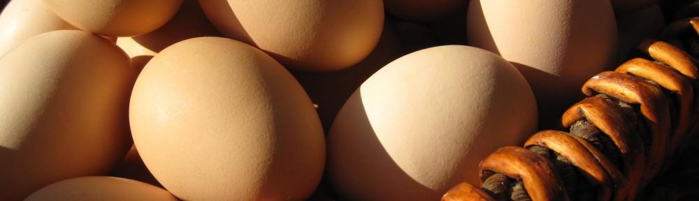 A Good Egg / Story & Photos by Montana Jones